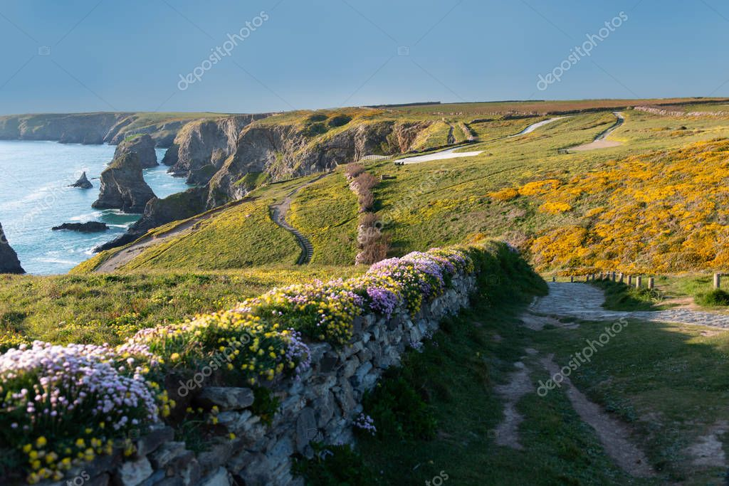 Countryside landscape with flowery bed near Bedruthan Steps in Cornwall United kingdom