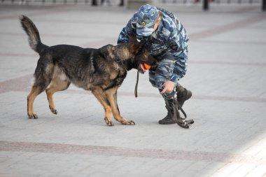 bir köpek işleyicisi ile polis köpekleri