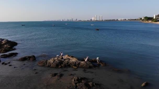 Lidé na kamenech na pobřeží sbírat mušle, mušle, mořské plody. pohled shora