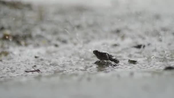 trauriger Frosch sitzt unter schwerem tropischen Regen.