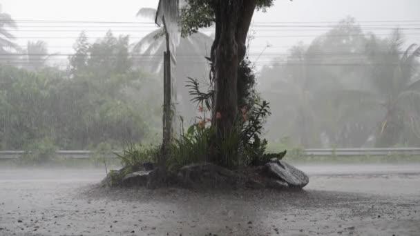 Panorama della giungla verde durante la pioggia tropicale. Alberi della giungla verde e palme, nebbia e pioggia tropicale