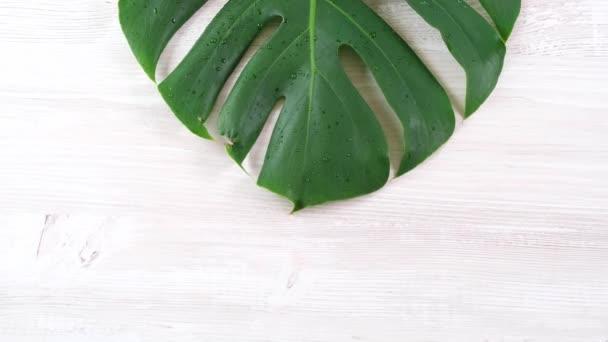 tropické letní monstera listy na bílém dřevěném pozadí, kopírovací prostor