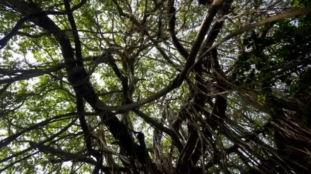 Zkroucené liány na mokré exotických rostlin a stromů v divočině hustého deštného pralesa