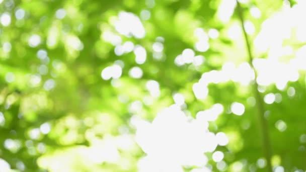 Homályos gyönyörű zöld természet háttér, Sunshine through zöld levelek és fúj a szél.