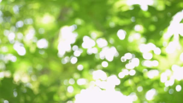 Blurred beautiful green nature background, Sunshine through green leaves and blowing by the wind.
