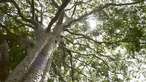 Spring sun gently shining through the green branches of a big tree in tropical rain forest.