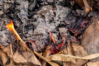 Dry leafs burning  producing ash and smoke