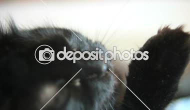 všechna černá kočička videa eben lesbické dvojité dildo