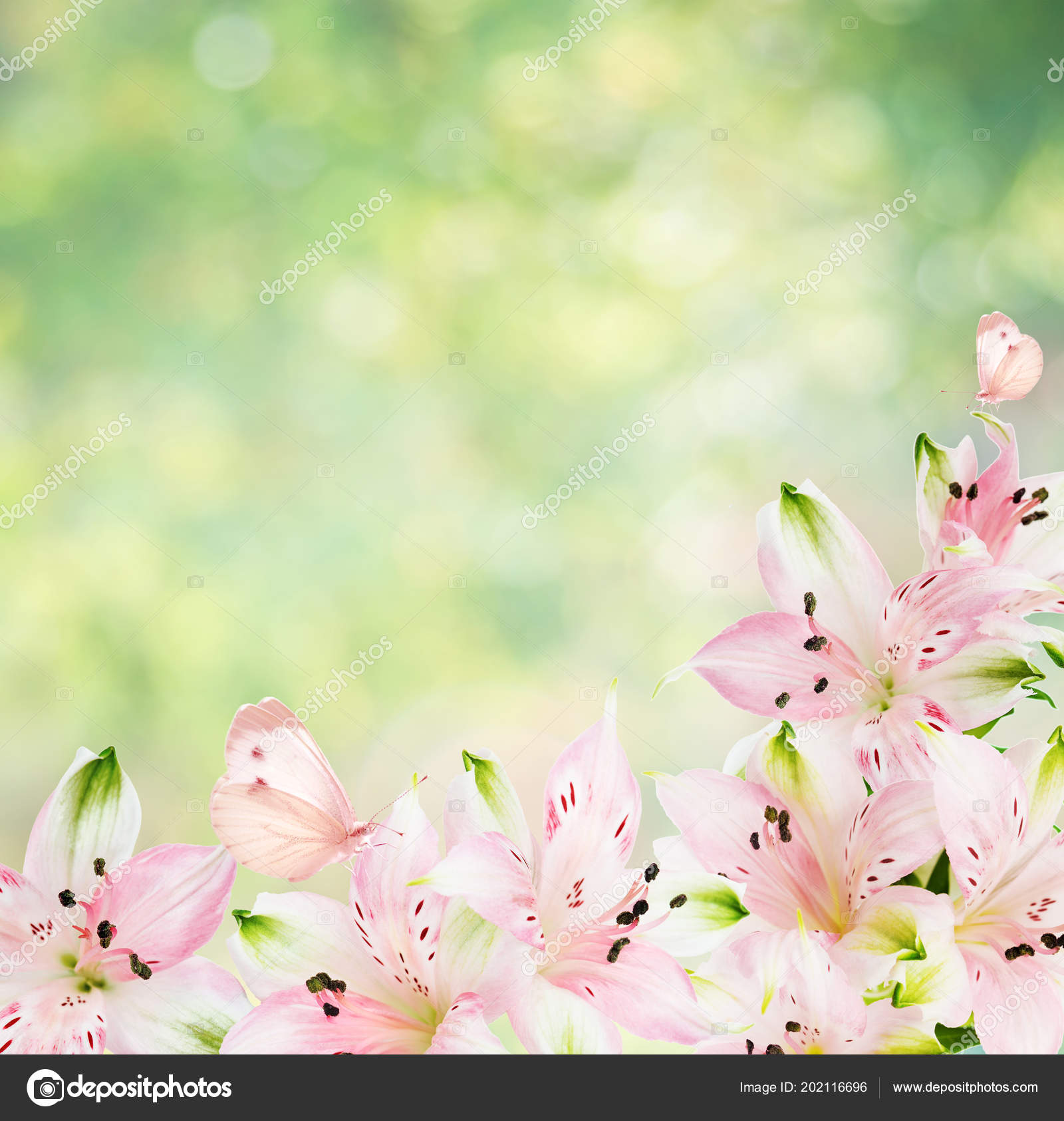 Beautiful Frame Pink Alstroemeria Flowers Butterfly Blurred Abstract