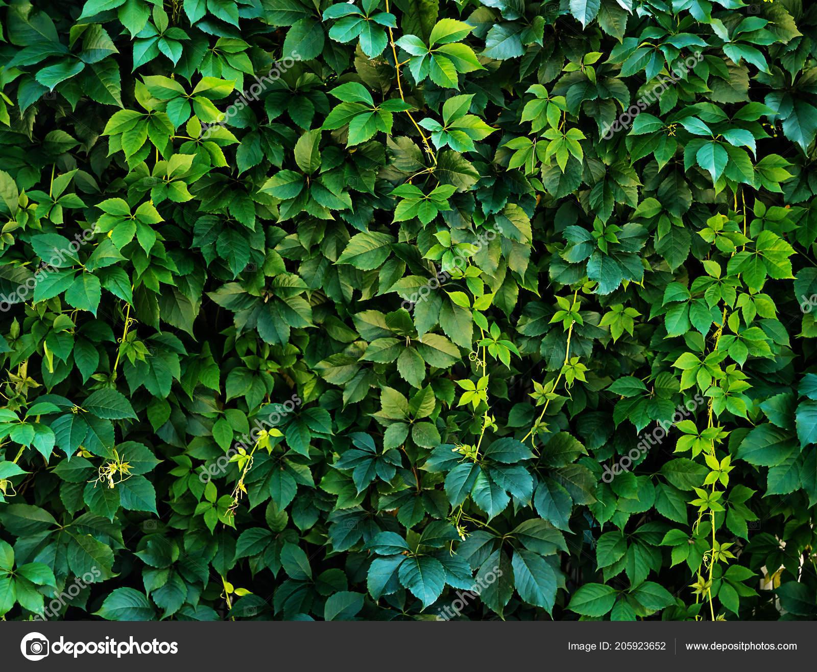 Foto Foglia Con Texture Sfondo Naturale Con Texture Primo Piano