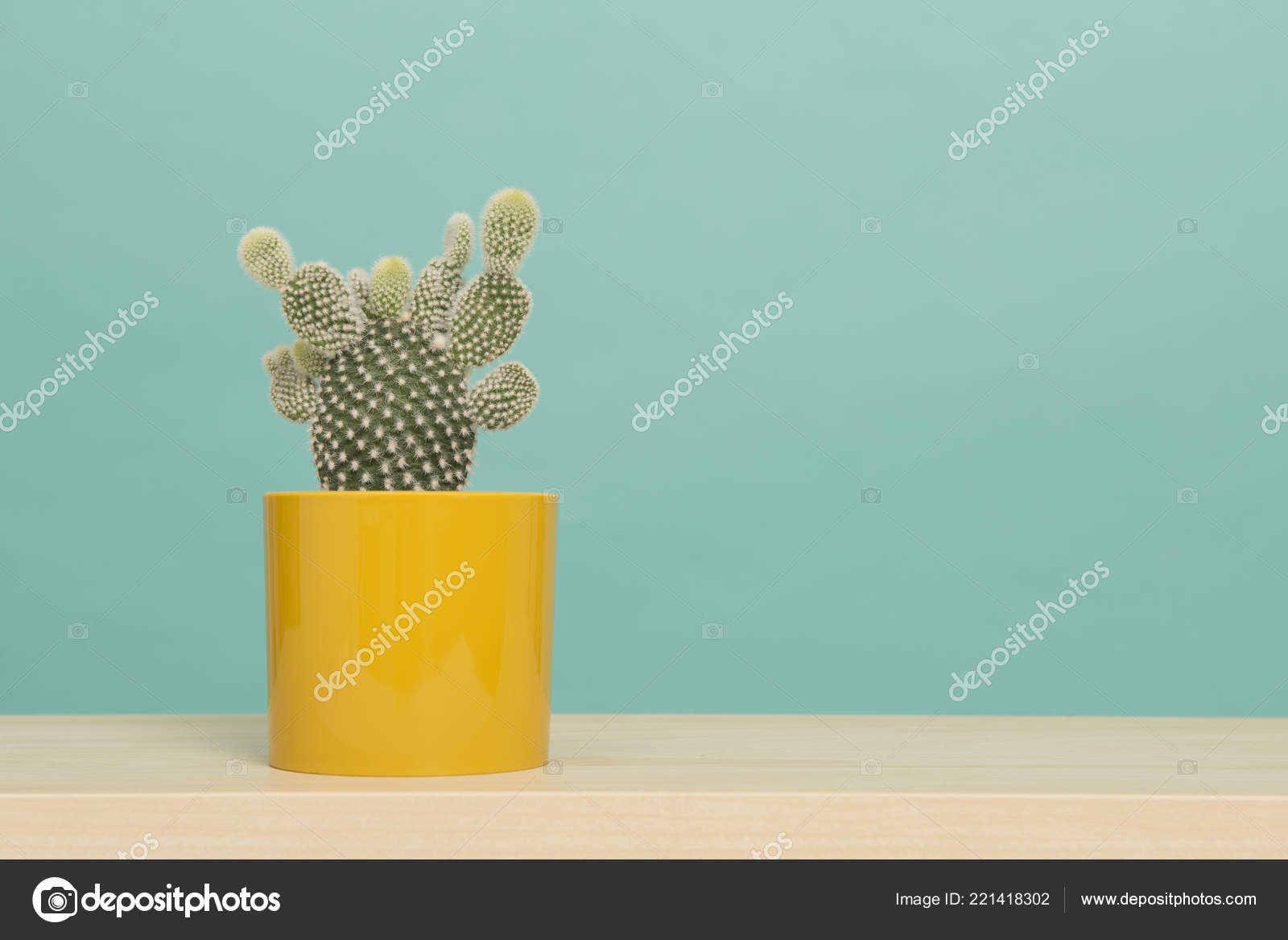 Ripiani In Legno Per Tavoli : Pianta del cactus vaso fiori giallo tavolo legno ripiano sfondo