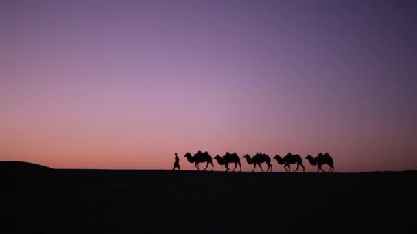 Velbloudí karavana silueta při západu slunce v poušti