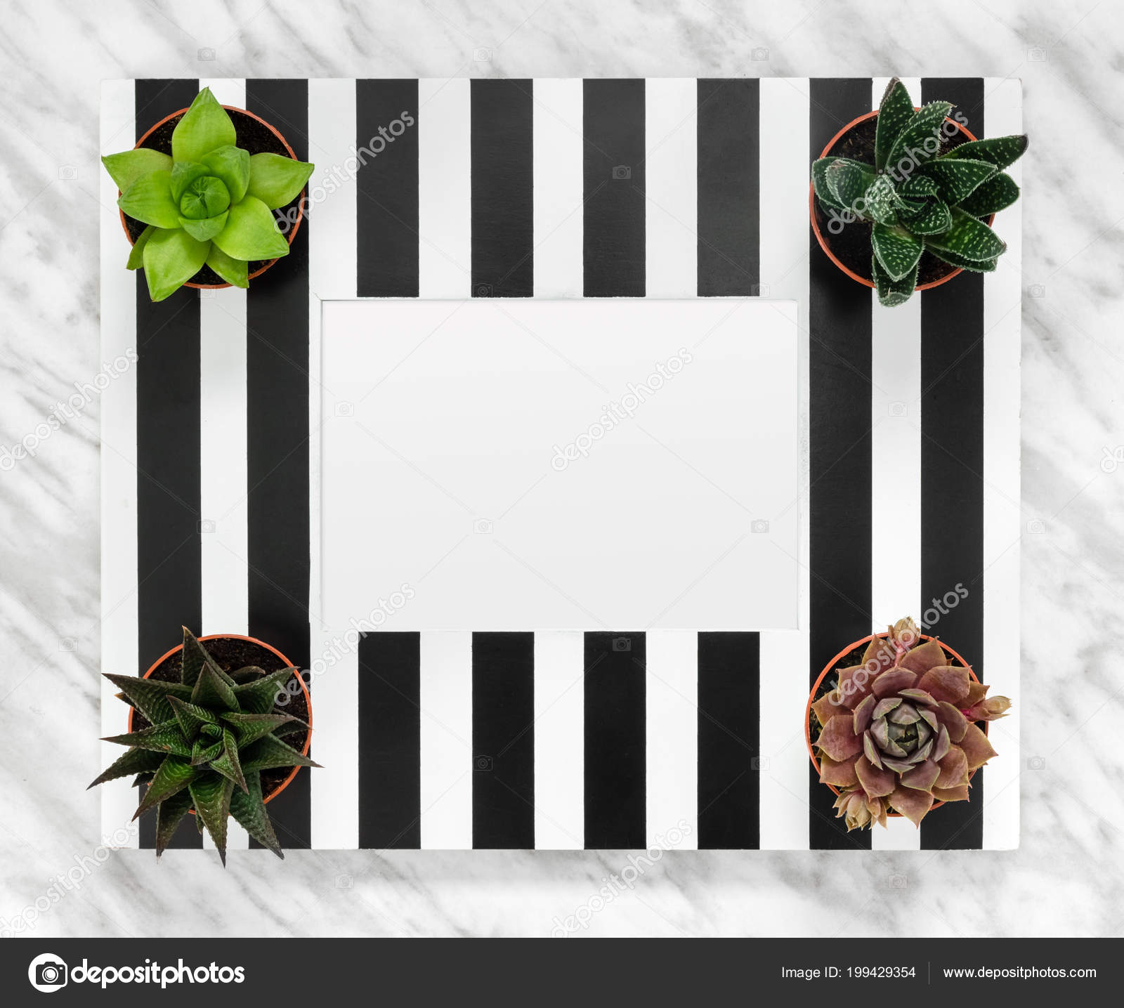 Black White Striped Picture Frame Copy Space Succulent Plants