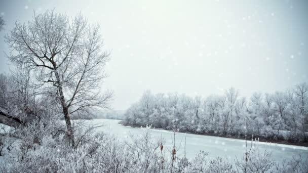 částice bílý sníh létá na pozadí zasněžených stromů. sníh v lese. 3D vykreslování