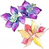 Lila és sárga orchidea virágok. Elszigetelt ábra elemet. Akvarell háttér illusztráció. Kézzel rajzolt aquarelle virágok.