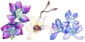 Purple and white orchid flowers isolated on white. Watercolor background illustration. Hand drawn aquarelle flowers.