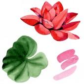 Piros lótuszvirág elszigetelt fehér zöld levél. Virágos botanikai virág. Akvarell háttér illusztráció