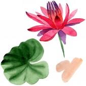 Piros lótuszvirág elszigetelt fehér zöld levél. Virágos botanikai virág. Akvarell háttér illusztráció.