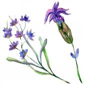 Fényképek Levendula lila virágok. Vad tavaszi vadvirágok elszigetelt fehér. Kézzel rajzolt levendula virágok-akvarell. Akvarell háttér illusztráció