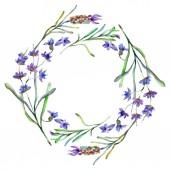Květy fialové levandule. Jarní kvítí. Ilustrace akvarel zázemí. Okraj rámečku věnec.