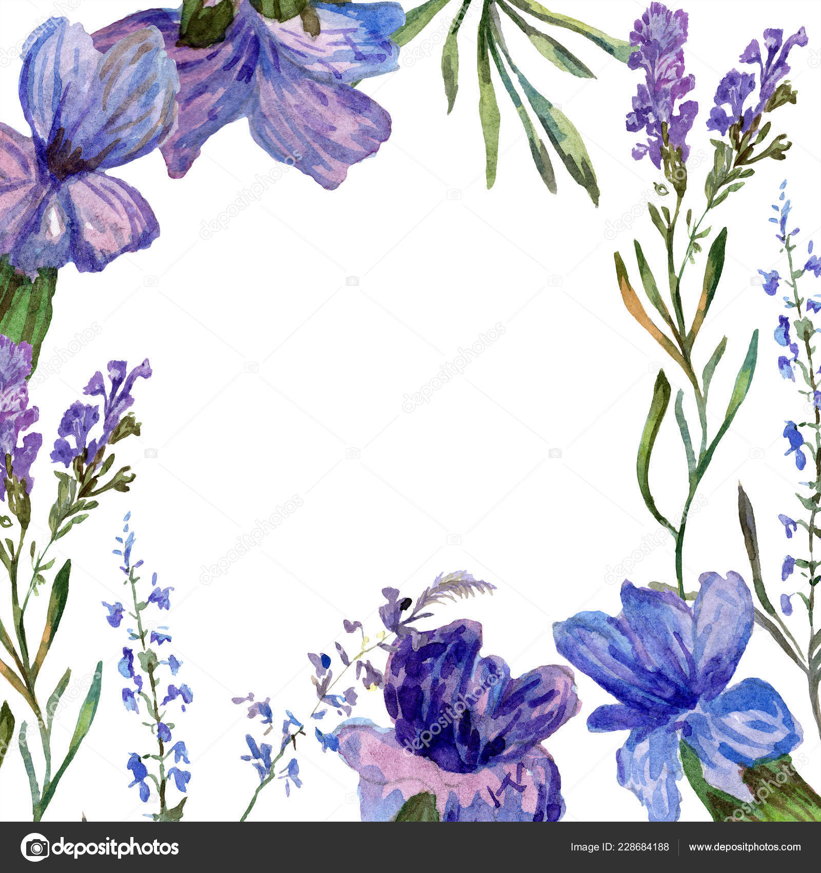 Purple Lavender Flowers Wild Spring Flowers Watercolor Background Illustration Frame Stock Photo Image By C Andreyanush 228684188