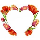 Fotografia Incredibili fiori di tulipano rosso con foglie verdi. Fiori botanici disegnati a mano. Illustrazione dellacquerello della priorità bassa. Cuore di Natale confine cornice