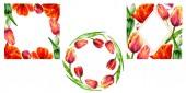 Fotografie Tolle rote Tulpe Blumen mit grünen Blättern. Handgezeichnete botanische Blumen. Aquarell Hintergründe festgelegt. Ornamentale Kranz, Platz und gold Kristall frames