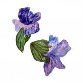 Fotografie Lila Lavendel Blumen. Wilde Wildblumenwiese isoliert auf weiss. Handgezeichnete Lavendelblüten in Aquarell. Aquarell Hintergrund illustration