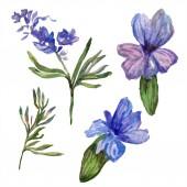 Levendula lila virágok. Vad tavaszi vadvirágok elszigetelt fehér. Kézzel rajzolt levendula virágok-akvarell. Akvarell háttér illusztráció