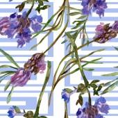 Levendula lila virágok. Varratmentes háttérben minta. Szövet nyomtatási textúrát. Kézzel rajzolt ábrán akvarell háttér