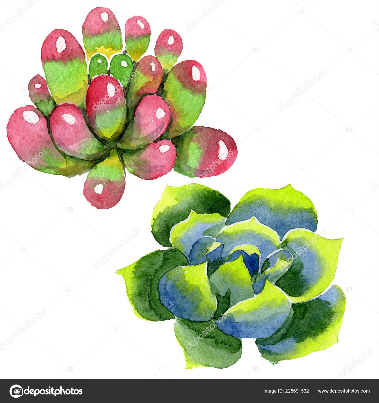 Background Succulents Drawing Amazing Succulents Watercolor Background Illustration Aquarelle Hand Drawing Isolated Succulent Stock Photo C Andreyanush 228691532
