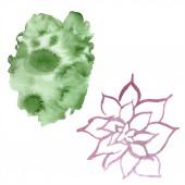 Abstraktní zelené aquarelle splash pozadí, textury. Ilustrace akvarel zázemí. Aquarelle ruční izolované sukulentních rostlin
