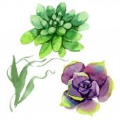 Fotografie Úžasné sukulenty. Ilustrace akvarel zázemí. Aquarelle ruční izolované sukulentních rostlin