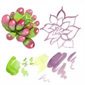 Úžasné sukulenty. Ilustrace akvarel zázemí. Aquarelle ruční izolované sukulentních rostlin a skvrny