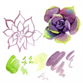 Fotografie Amazing succulents. Watercolor background illustration. Aquarelle hand drawing isolated succulent plants and stains.