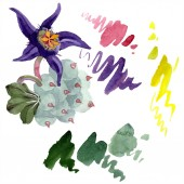 Duvalia květ. Izolované duvalia prvek obrázku. Ilustrace akvarel zázemí. Aquarelle ruční izolované sukulentní a skvrny