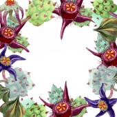 Duvalia flowers. Watercolor background illustration. Floral square frame. Aquarelle hand drawing succulent plants.