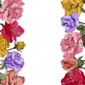 Vektor růže. Květinové botanické květin. Červené, růžové a fialové ryté inkoust umění. Květinové ohraničení obrázku.