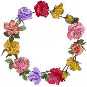 Vektor růže. Květinové botanické květin. Červené, růžové a fialové ryté inkoust umění. Frame hranice ornament věnec.