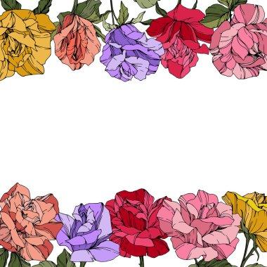 Vector Roses. Floral botanical flowers. Red, pink and purple engraved ink art. Floral border illustration.