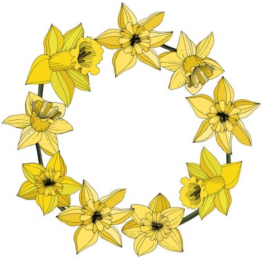Vector Narcissus flowers. Yellow engraved ink art. Frame floral ornament round on white background. clip art vector