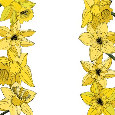 Vector Narcissus flowers. Yellow engraved ink art. Border floral ornament on white background. clip art vector