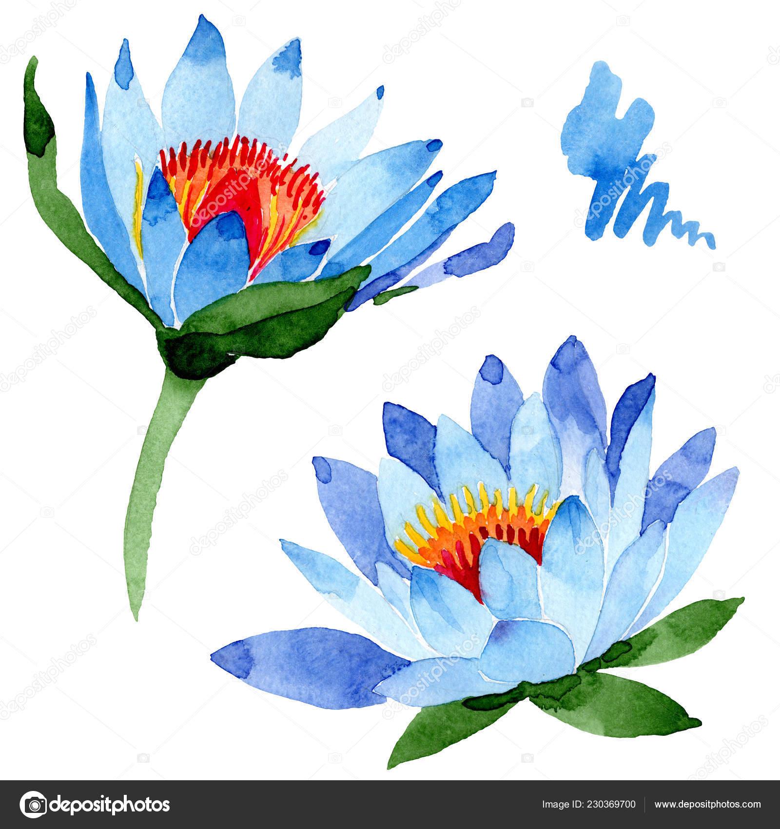 Fleurs Lotus Bleu Magnifique Isolés Sur Blanc Illustration