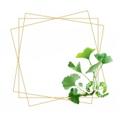 Beautiful green ginkgo biloba with leaves isolated on white. Watercolor background illustration. Watercolour drawing fashion aquarelle isolated on white. Frame border ornament.
