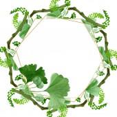 Bella verde ginkgo biloba con le foglie isolate su bianco. Illustrazione dellacquerello della priorità bassa. Acquerello disegno aquarelle moda isolato su bianco. Ornamento del bordo cornice