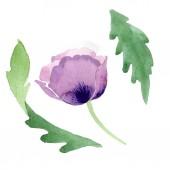 Wunderschöne Burgunder Mohnblume isoliert auf weiss. Aquarell Hintergrund Illustration. Aquarell Zeichnung Mode-Aquarell-isolierte Mohn Abbildung-element.