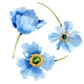 Gyönyörű kék pipacs virágok elszigetelt fehér. Akvarell háttér illusztráció. Akvarell, rajz, divat aquarelle elszigetelt pipacs virágok ábra elem