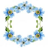 Fotografia Bei papaveri blu con foglie verdi isolato su bianco. Illustrazione dellacquerello della priorità bassa. Aquarelle di moda disegno acquerello. Priorità bassa di ornamento del bordo cornice
