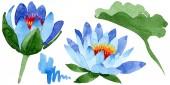 Krásný modrý Lotos květiny izolované na bílém. Ilustrace akvarel zázemí. Akvarel, kresba módní aquarelle izolované lotus květiny ilustrace element.