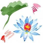 Krásný modrý Lotos flower izolované na bílém. Ilustrace akvarel zázemí. Akvarel, kresba módní aquarelle lotus izolované ilustrace prvek